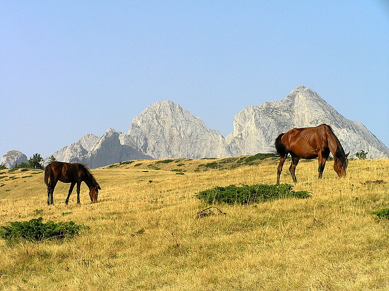 Horses on the Mountain
