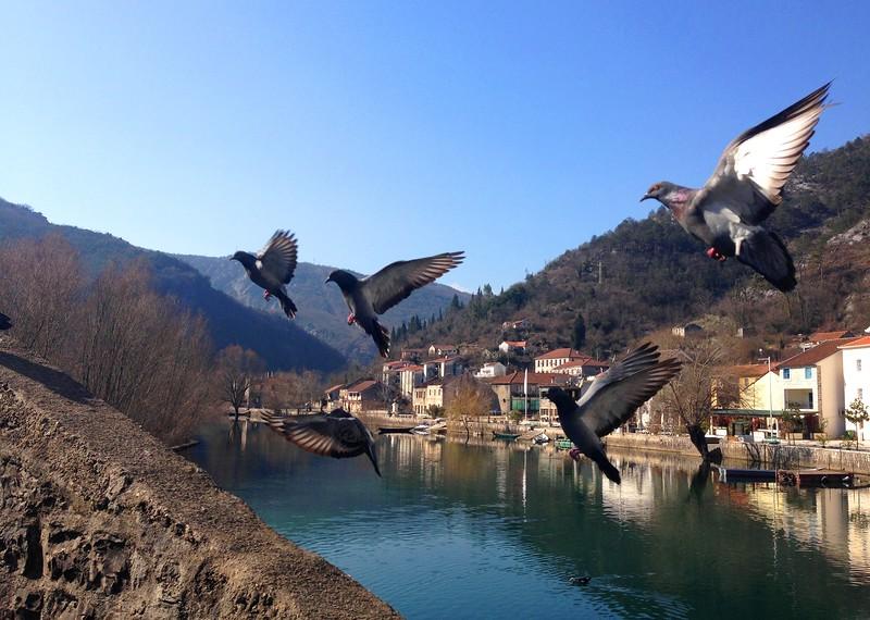 birds rijeka crnojevica