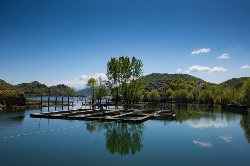 Shores of Skadar Lake