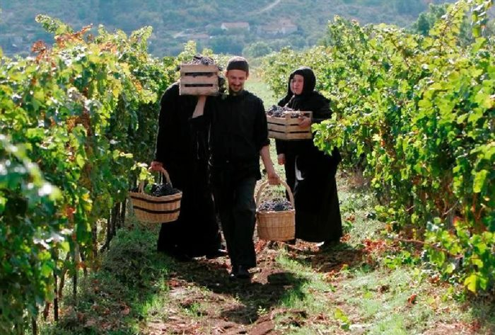 Monks in the vineyard Tvrdos Monastery Trebinje