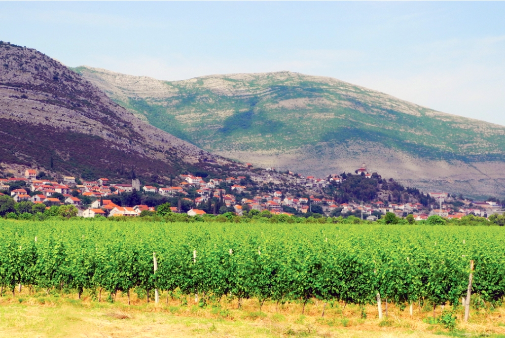 Trebinje vineyards