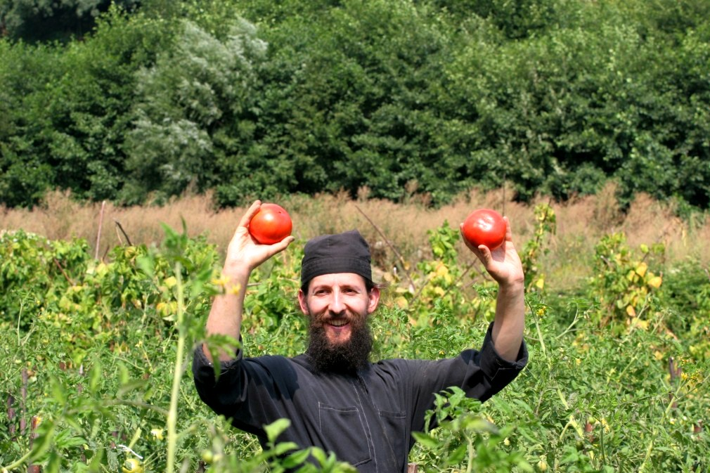 Tomatoes in the Monastery of Decani cultivated by monks