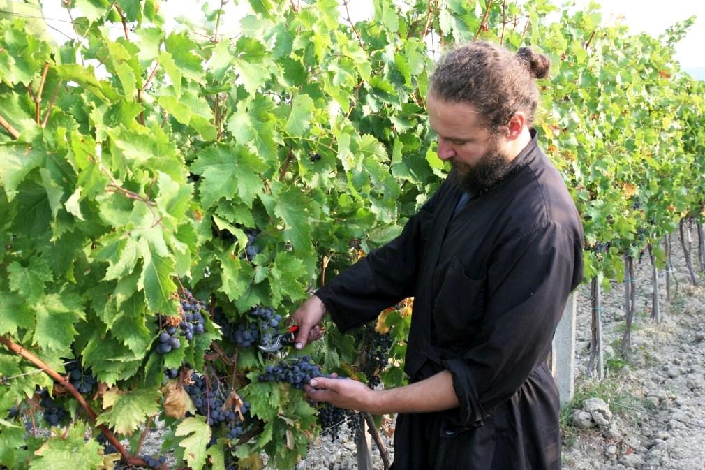 Vineyards of Decani Monastery