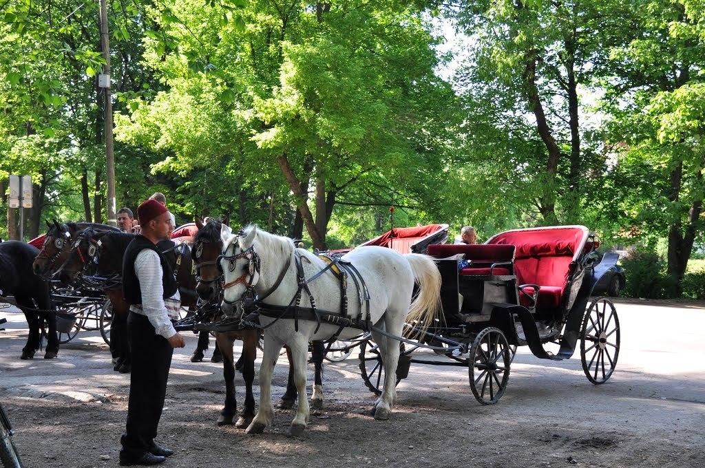 Horse carriage at Vrelo Bosne Ilidza, Sarajevo