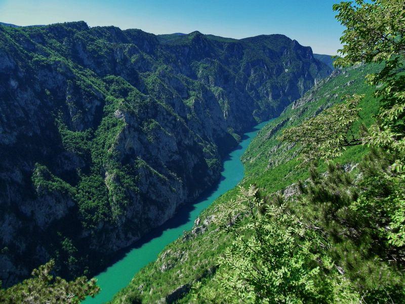 La rivière Tara Monténégro