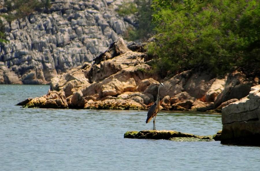 Le parc naturel du lac de Skadar - la plus grande réserve d'oiseaux d'Europe