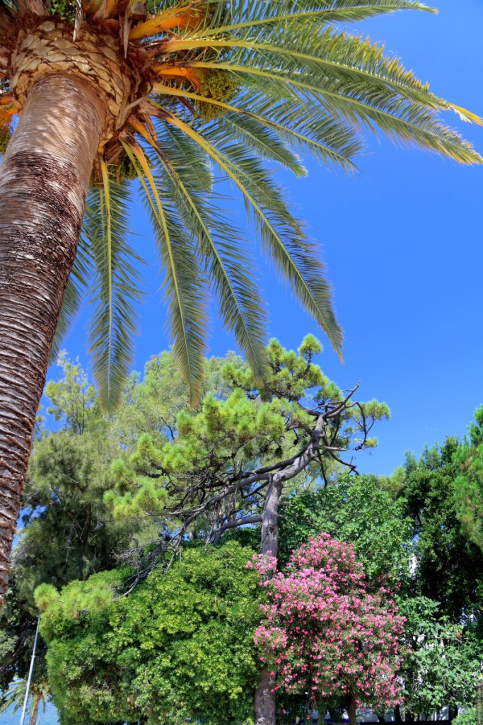 Tivat examples of exotic plants