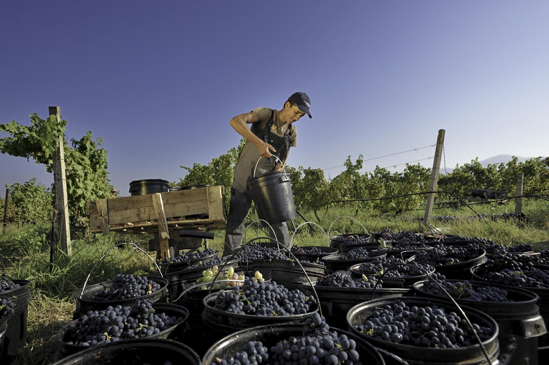 Plantaze Vineyards Montenegro