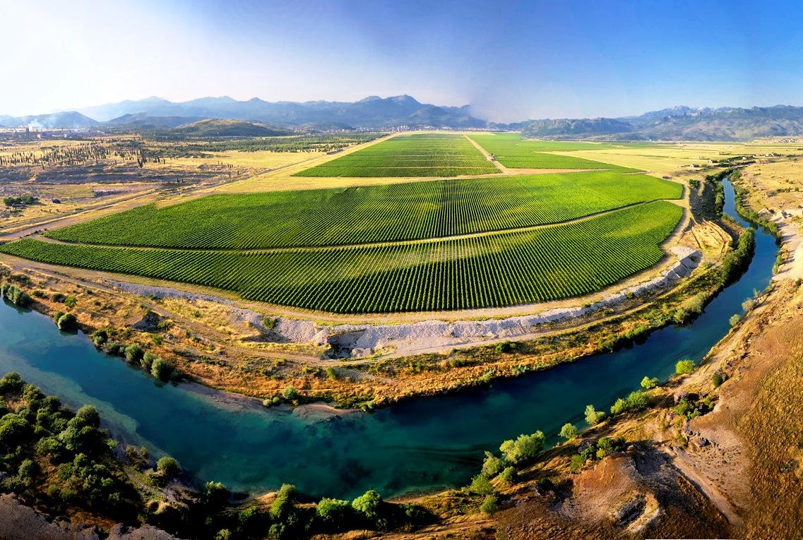Vineyards Cemovsko polje Montenegro