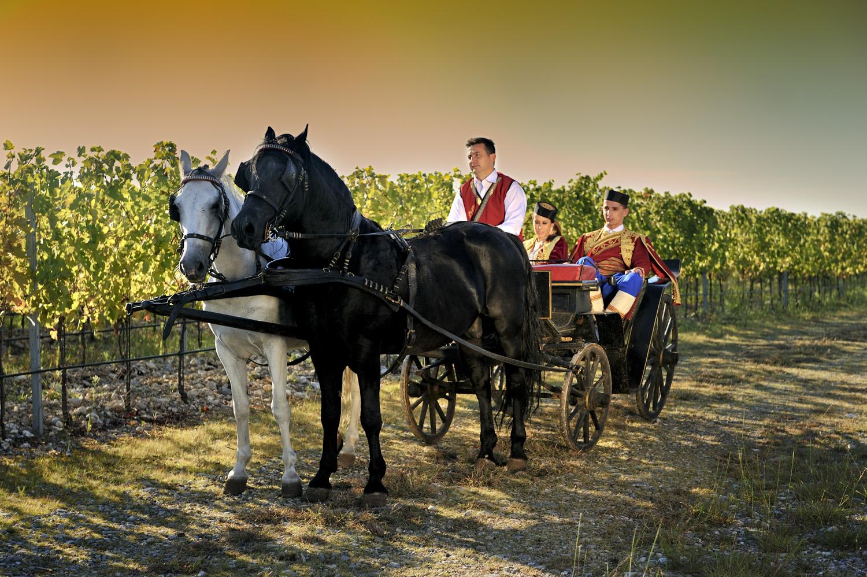 Vineyards Plantaze Montenegro