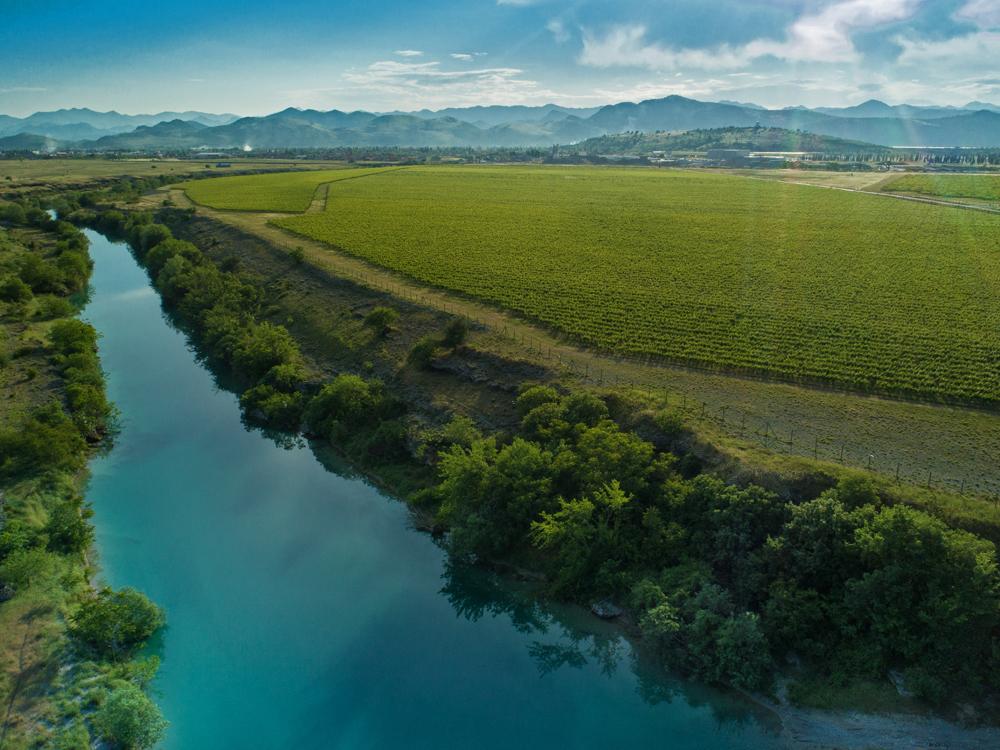 Vineyards around Lake Skadar