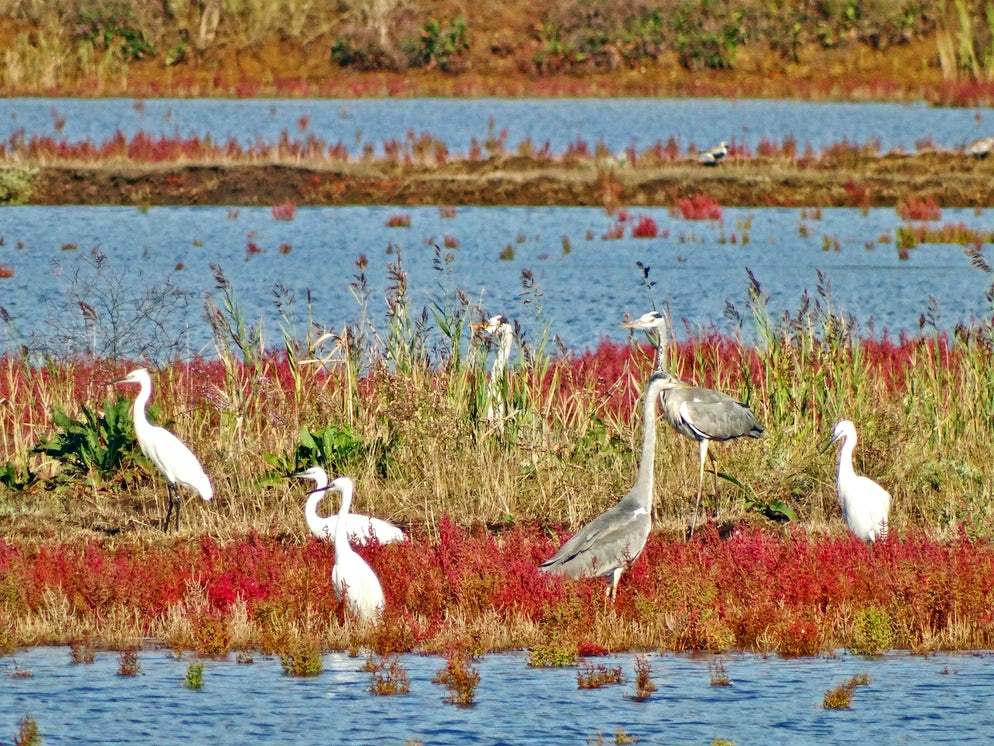 birds in ulcinj salina