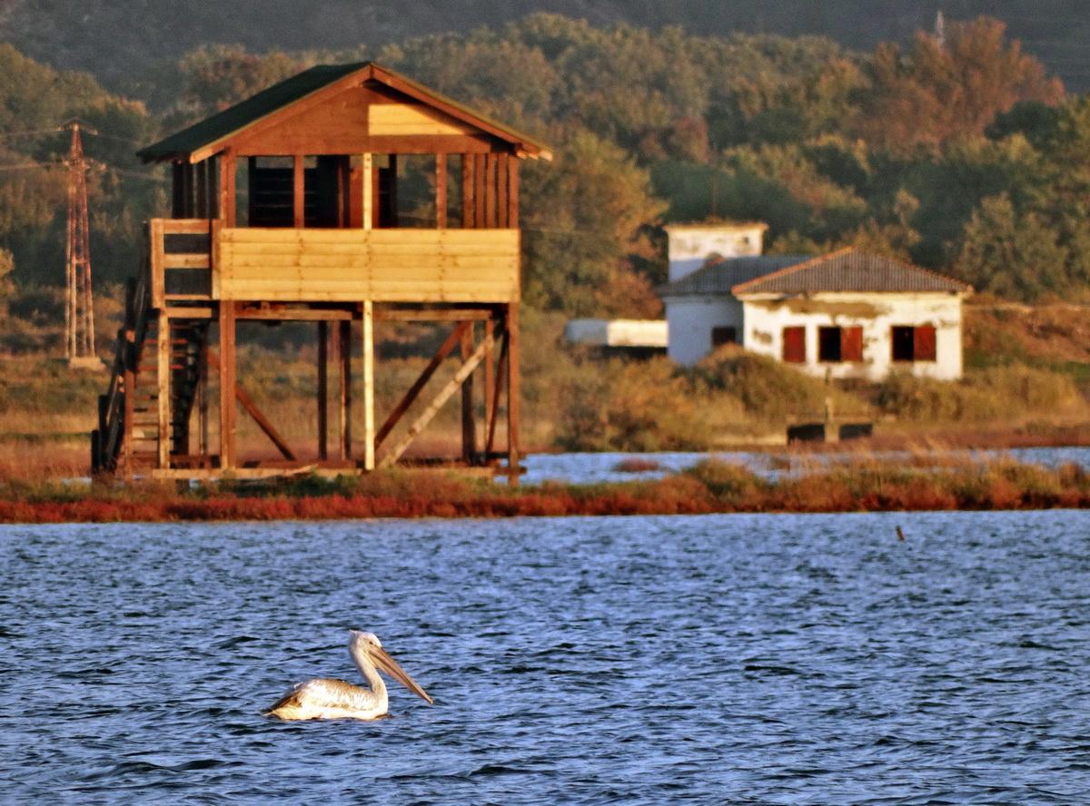 Pelican and bird observatory